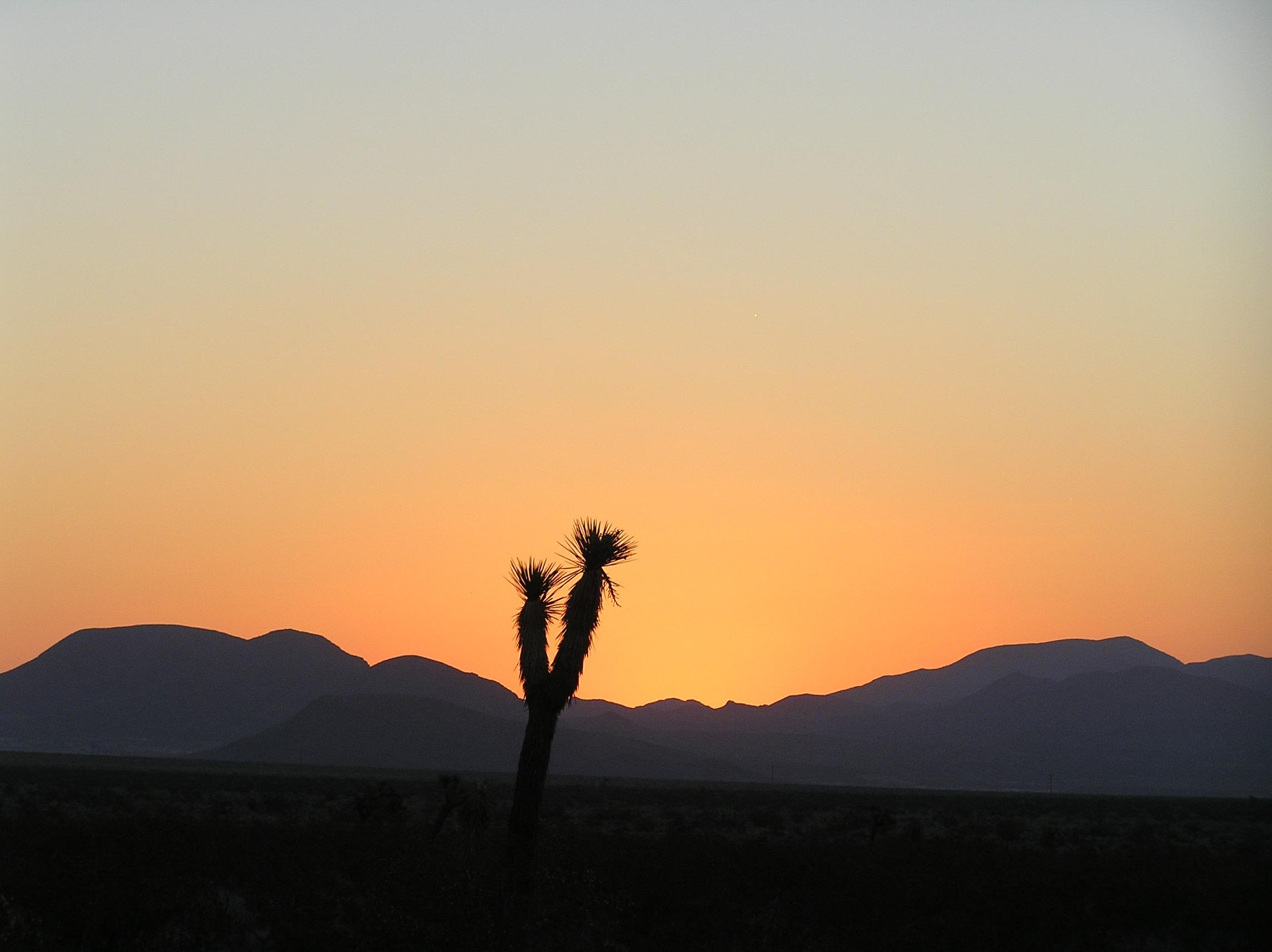 Joshua Tree at sunrise, Mojave Desert, California